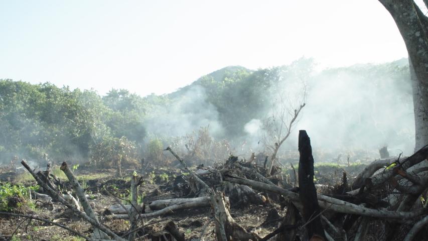 Forest burning wide, smoke, enviro destruction | Shutterstock HD Video #1052919026