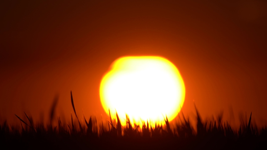 Wheatgrass field silhouette at sunset. blurred sun and clouds appear in the background. wind blows the field. Attention - shallow and blurred depth of field | Shutterstock HD Video #1052919071