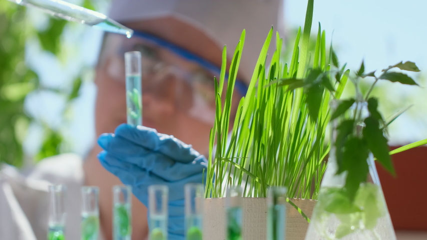 Female hands microbiologist scientist biologist researcher with test tube liquid, plant seedling lab, GMO Biological agriculture research genetic engineering laboratory, seeds food farming 4 K slow-mo Royalty-Free Stock Footage #1052976635