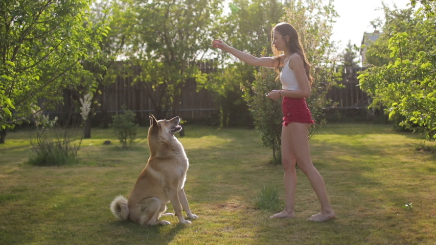 Woman is training her dog and giving food in a garden | Shutterstock HD Video #1052984318