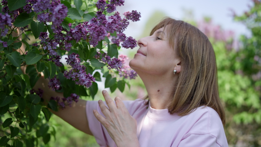 Closeup portrait of an adult woman gardener sniffing flowering serenes in her yard. Mature joyful lady and bush flowers in her country house. A female summer clerk in his garden enjoys nature. Royalty-Free Stock Footage #1052989088