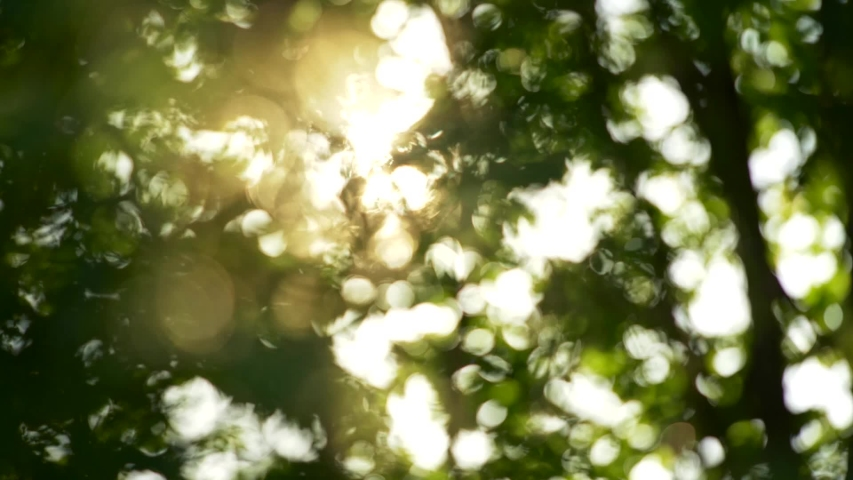 Summer concept of abstract blurred background. Sun getting through trees foliage. Slow motion shot | Shutterstock HD Video #1052989391