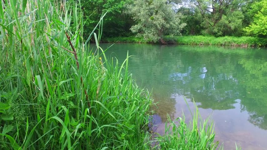 Pringtime in a riverside forest at the river mitterwasser near the danube river in austria | Shutterstock HD Video #1053023285