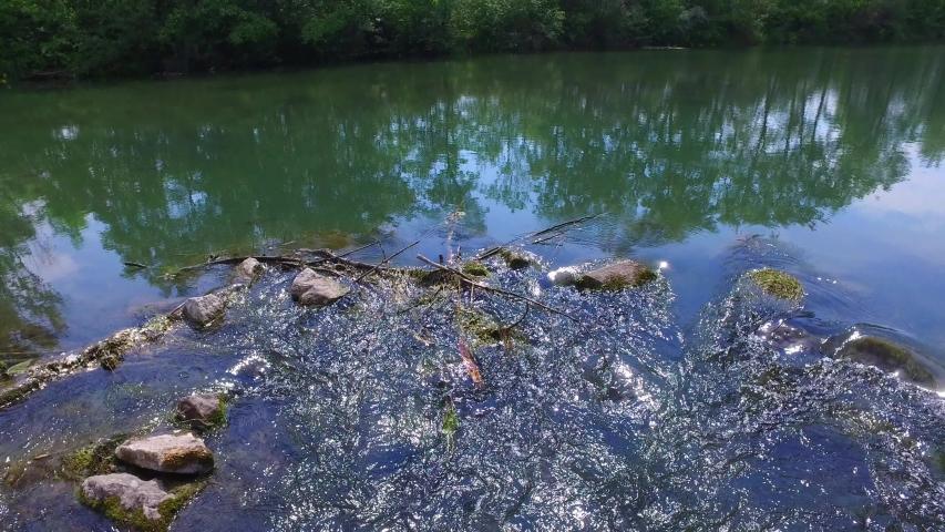 Pringtime in a riverside forest at the river mitterwasser near the danube river in austria | Shutterstock HD Video #1053023291