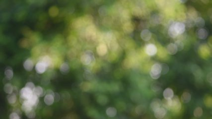 Natural bokeh Green leaves, light in nature, animated