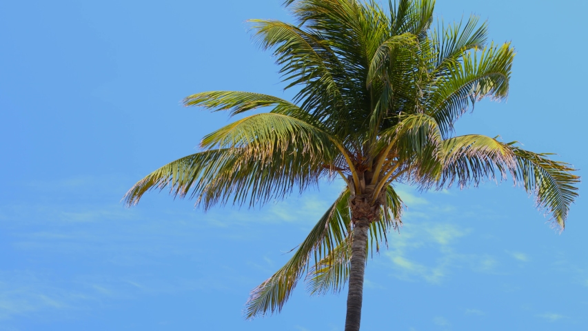 6k video Miami Beach palm trees | Shutterstock HD Video #1053058988