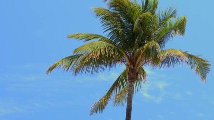 6k video Miami Beach palm trees