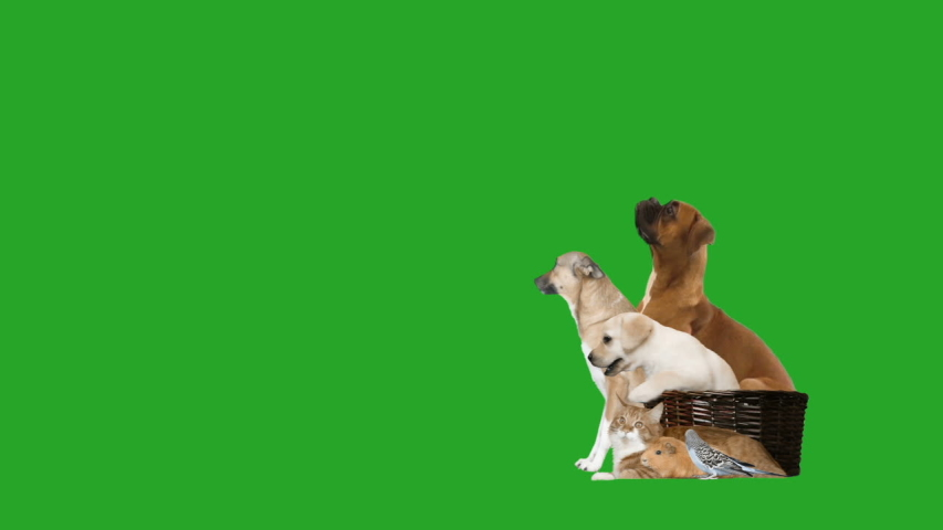 Group of animals looks on a green screen, side view | Shutterstock HD Video #1053097817
