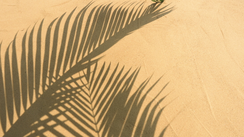 Motion of shadows palm leaves on sand beach texture background.