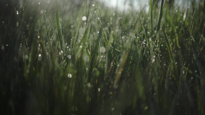 fresh morning water dew drops on vibrant green grass lit by the sun blowing in the wind close up zooming out through grass slow motion reveal Royalty-Free Stock Footage #1053124904