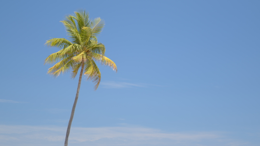 Nature 6k palm trees on blue sky | Shutterstock HD Video #1053138533