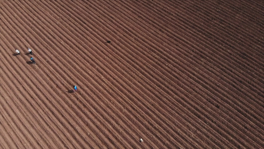 Aerial view with drone to farmer plowing the land to cultivate | Shutterstock HD Video #1053146903