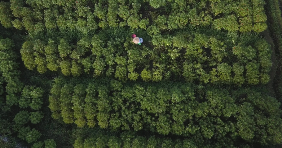 Aerial view of farmer working in flower field, Bali, Indonesia | Shutterstock HD Video #1053148865