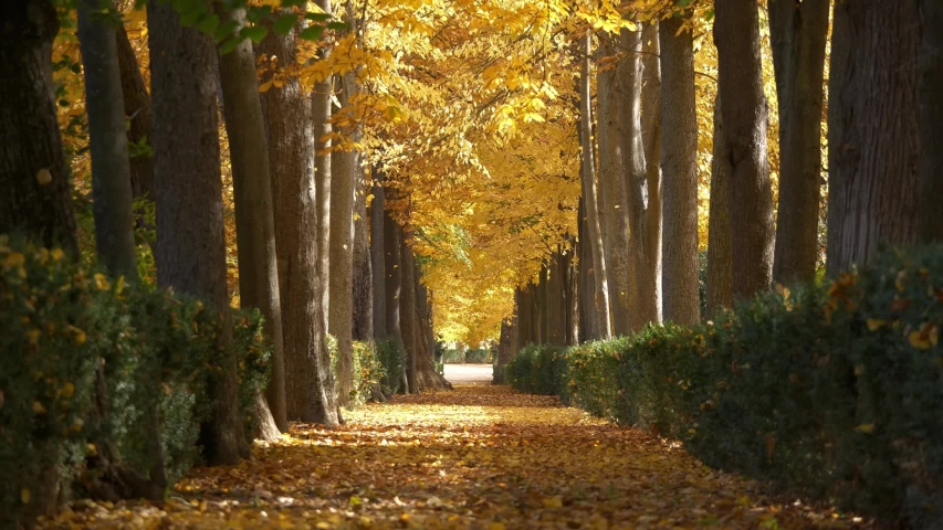 Pathway covered by yellow leaves in autumnal park