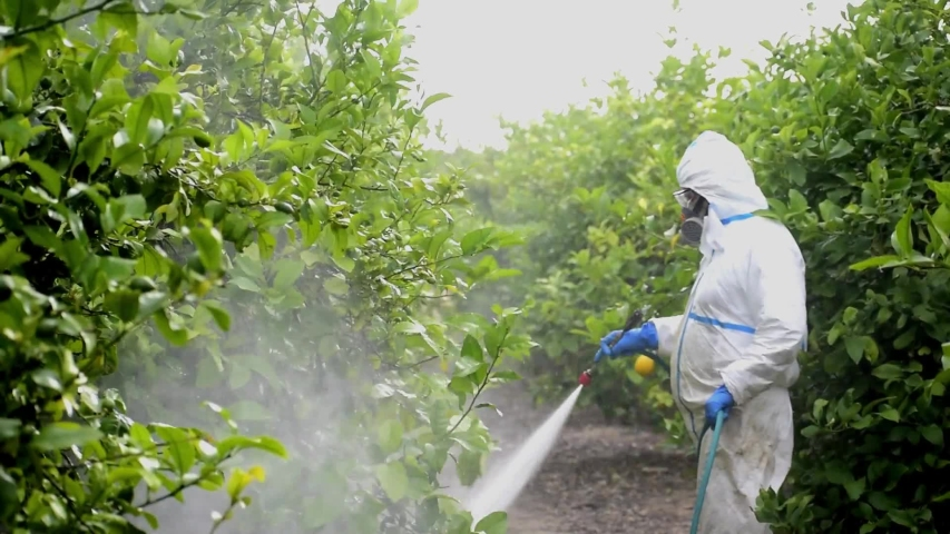 Spray ecological pesticide. Farmer fumigate in protective suit and mask lemon trees. Man spraying toxic pesticides, pesticide, insecticides  Royalty-Free Stock Footage #1053166883