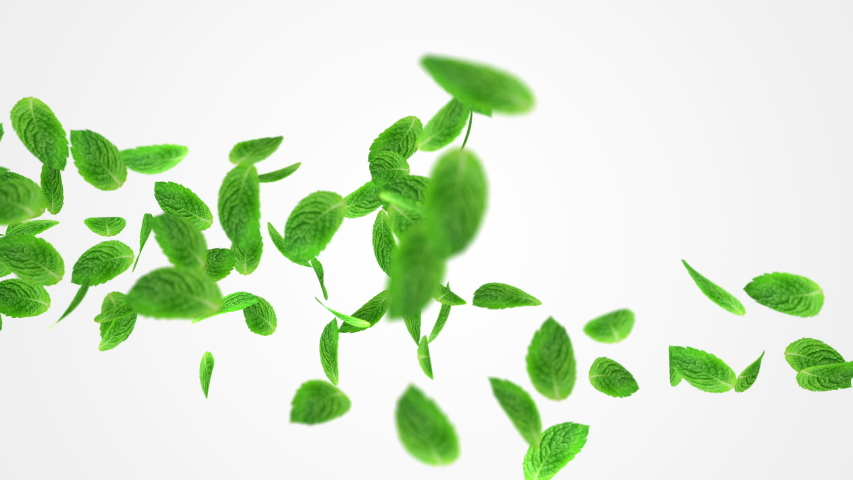 Abstract 3D animation of flying green mint leaf. Close up Render footage with fresh nice leaves on white background with alpha matte chanel. 4k.