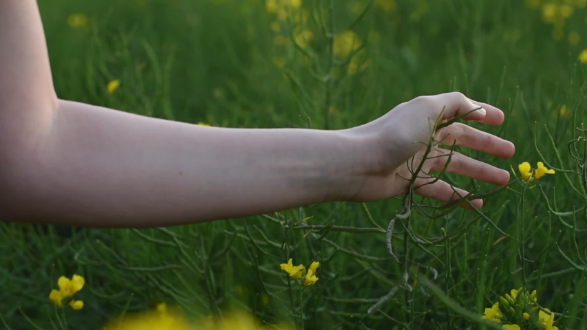Young woman hand moving over grass field with white yellow flowers with sun soft light. Touching nature plants, close up passing hand. Concept of feeling free and happy, optimistic. New life.