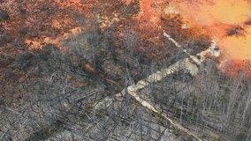 Deforestation. Logging. Environmental problem - destruction of rainforest. Aerial footage of deforestation, logging and palm oil plantations