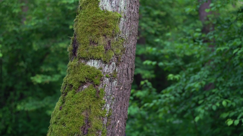 A man hugs with his hands a forest tree from behind. Environmental concept with copy space. | Shutterstock HD Video #1053384491