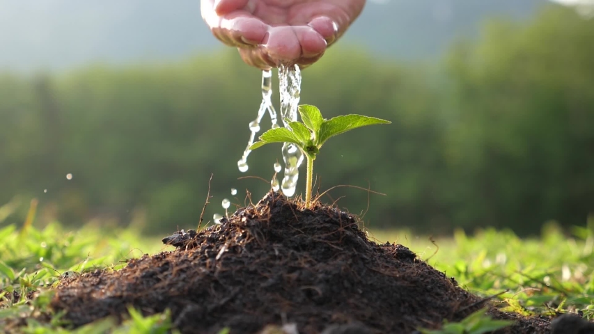 Hand Watering A Young Plant  Royalty-Free Stock Footage #1053386753