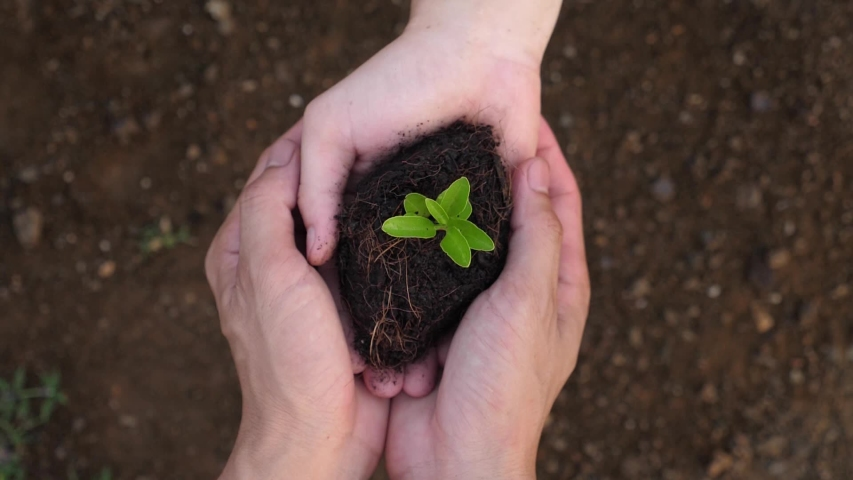 Child Hands Giving Small Plant  Royalty-Free Stock Footage #1053386813
