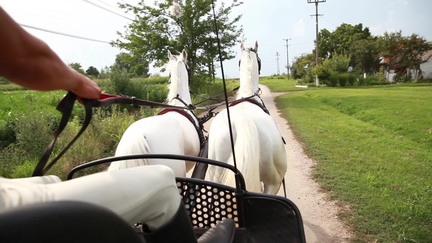 Rear view of pair of beautiful white horses from carriage on rural road. | Shutterstock HD Video #1053393998
