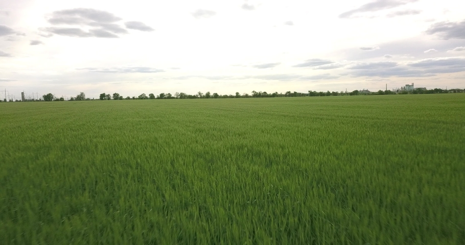 Flying over a large field of green wheat | Shutterstock HD Video #1053395864