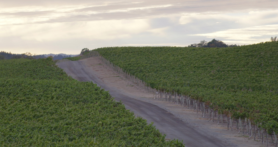 Sonoma Wine Vineyard 4K 24FPS | Shutterstock HD Video #1053403793