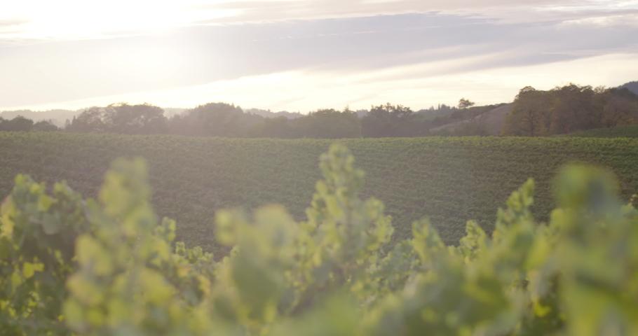 Sonoma Wine Vineyard 4K 24FPS | Shutterstock HD Video #1053403796