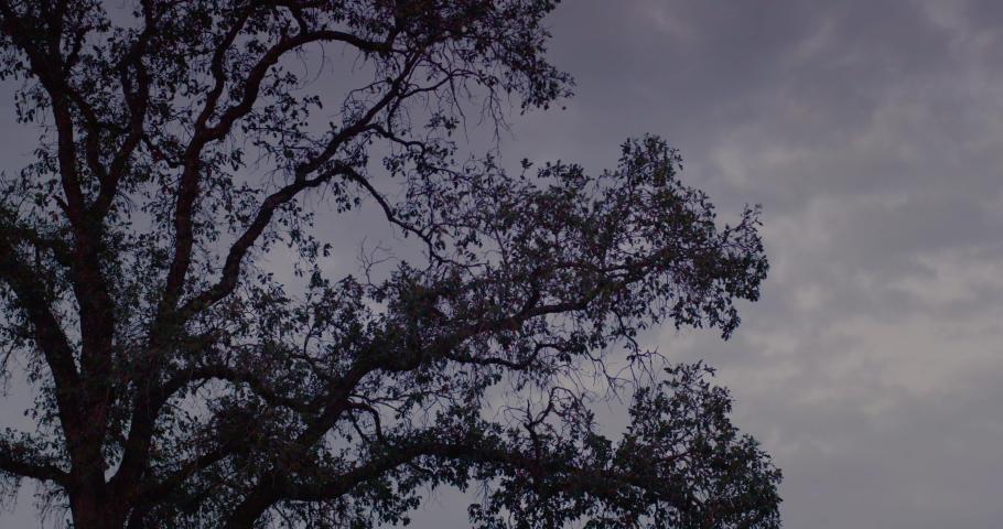 Sonoma Wine Vineyard 4K 24FPS | Shutterstock HD Video #1053403808