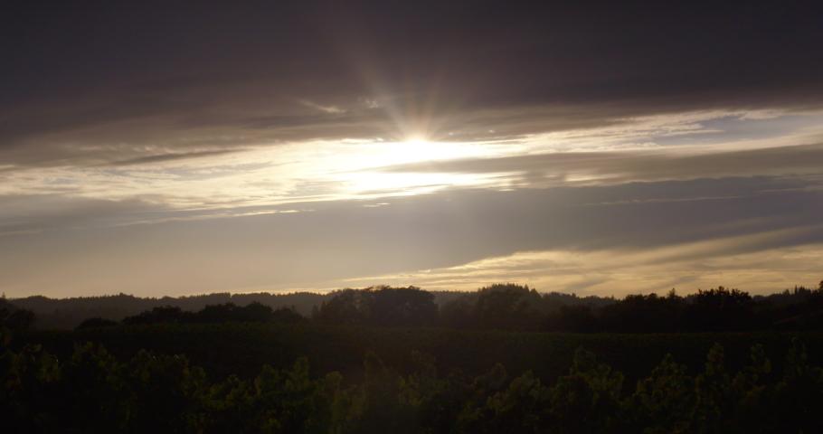 Sonoma Wine Vineyard 4K 24FPS | Shutterstock HD Video #1053403814