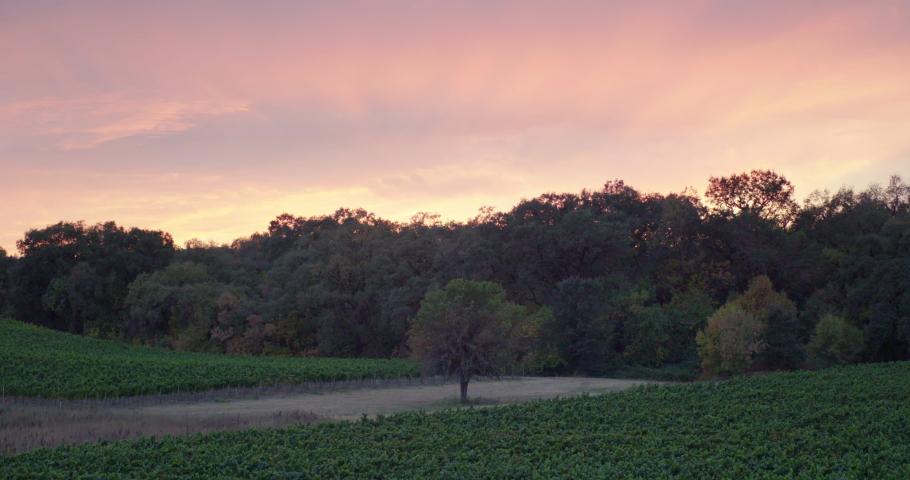 Sonoma Wine Vineyard 4K 24FPS | Shutterstock HD Video #1053403817