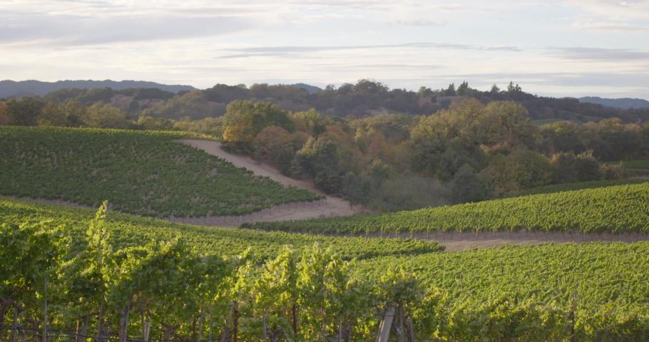 Sonoma Wine Vineyard 4K 24FPS | Shutterstock HD Video #1053403820