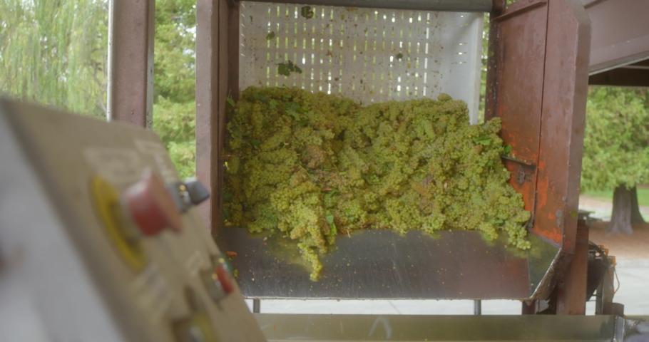 Sonoma Wine Vineyard 4K 24FPS | Shutterstock HD Video #1053403832