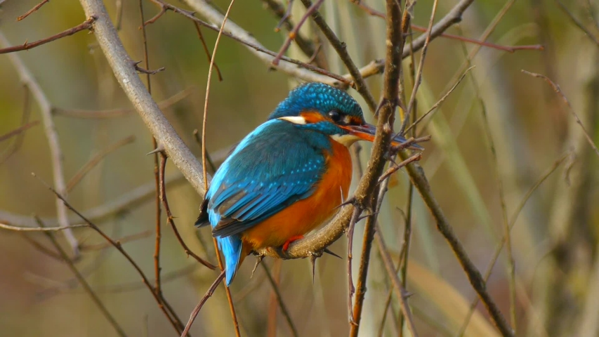 3 Clips of Colorful Little Birds | Shutterstock HD Video #1053409754