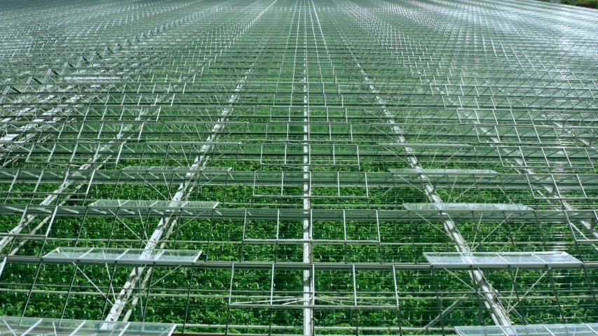 Flying over a large greenhouse with vegetables, a greenhouse with a transparent roof, a greenhouse view from above, growing tomatoes. Large industrial greenhouses.