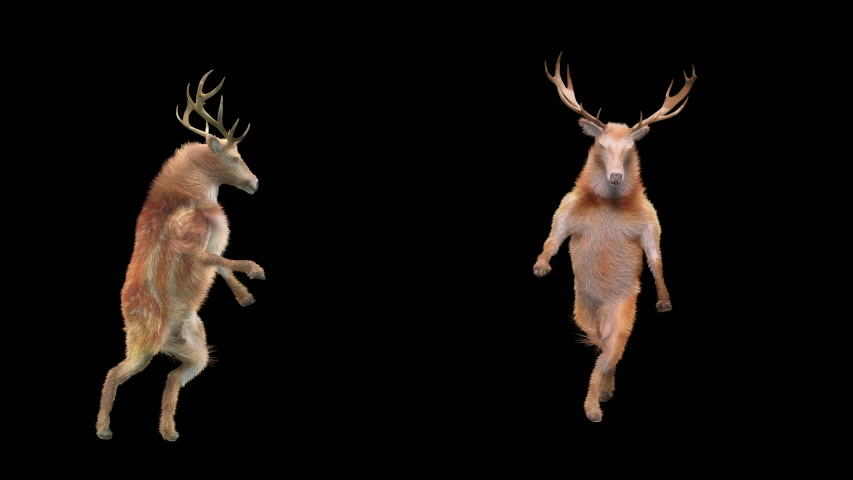 Deer Dance CG fur 3d rendering animal realistic CGI VFX Animation Loop  composition 3d mapping cartoon, Included in the end of the clip with Alpha matte.