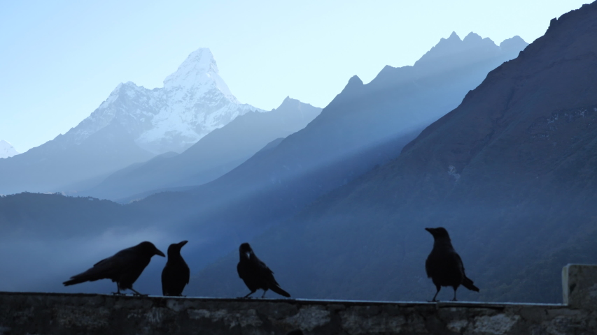 Feeding a group of raven on the wall against the backdrop of the Himalayan mountains,  Ama Dablam mountain view on Everest base camp trek | Shutterstock HD Video #1053463649