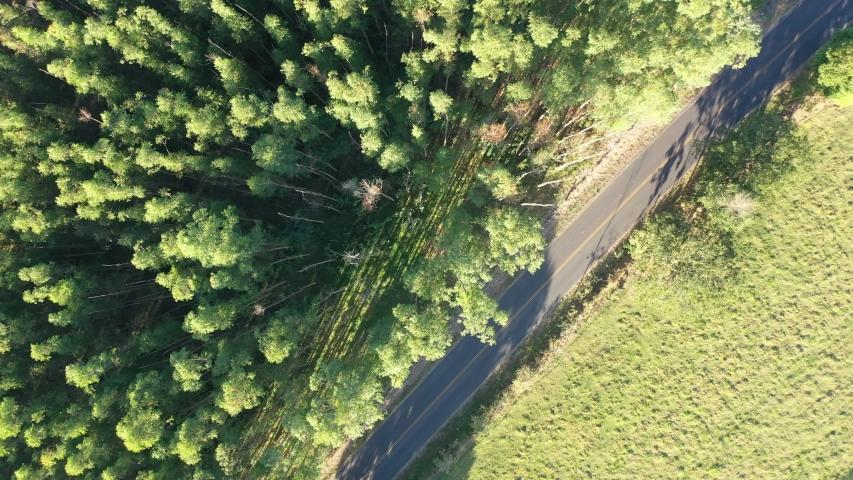 Rural Road. Top down view of beauty Eucalyptus Plantation. Rural Landscape. Rural Life scene. Countryside Road. Eucalyptus Trees. Countryside Scene. Rural Scene. Aerial Landscape. Single Road Area.  | Shutterstock HD Video #1053476471