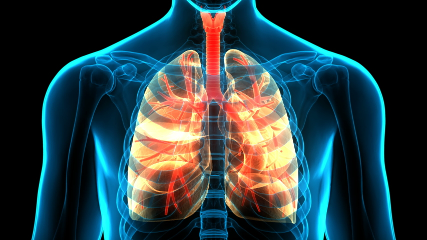 Human Respiratory System Lungs Anatomy Animation Concept. 3D Royalty-Free Stock Footage #1053490439