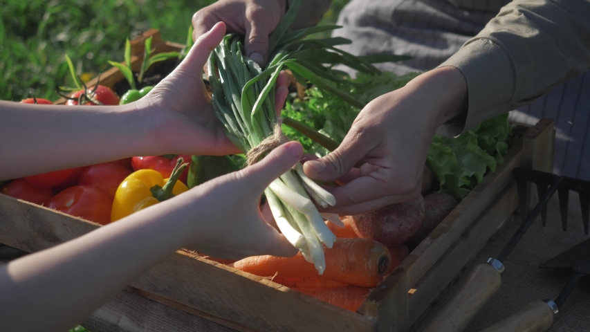 Farmer market outdoor - fresh organic vegetables, small local produce. Fresh organic food at the local farmers market, traditional way of selling agricultural products. eco food store