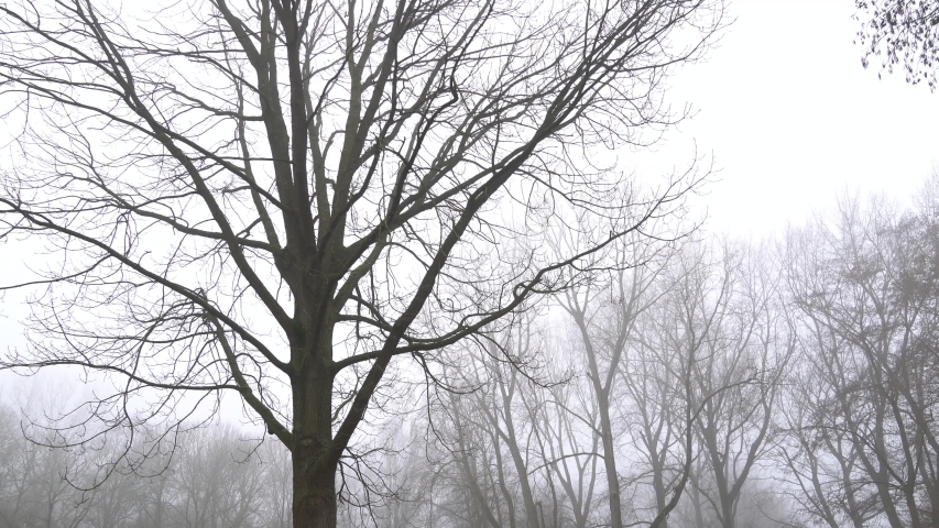 Winter Forest - foggy, windy, woody scenery of forest in The Netherlands | Shutterstock HD Video #1053496799