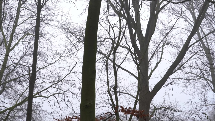 Winter Forest - foggy, windy, woody scenery of forest in The Netherlands | Shutterstock HD Video #1053496805