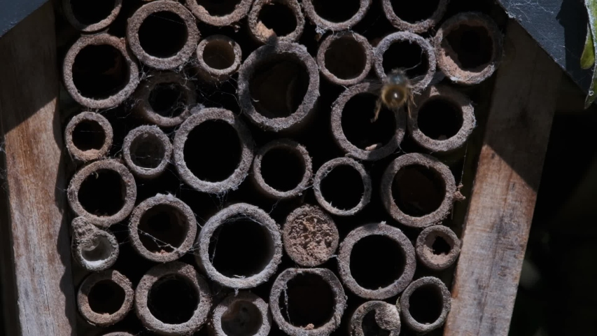 Two Solitary Bees Going Into Bee House Made From Bamboo Sticks Slow Motion Copy Space   Shutterstock HD Video #1053500285
