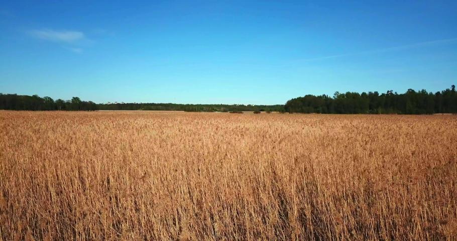Field of Reeds in Helsinki | Shutterstock HD Video #1053501419