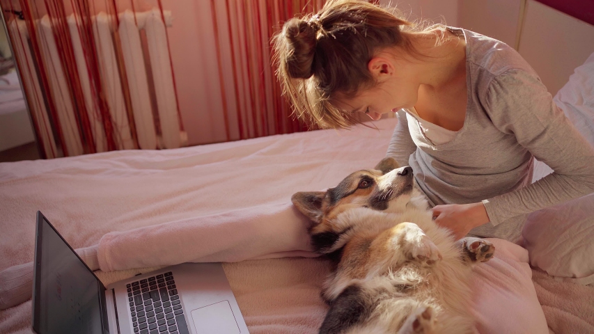 Tender kind young woman hugs and strokes cute Corgi dog on bed in bedroom. girl spending time with pet during quarantine. stay home, domestic life with animals | Shutterstock HD Video #1053502661
