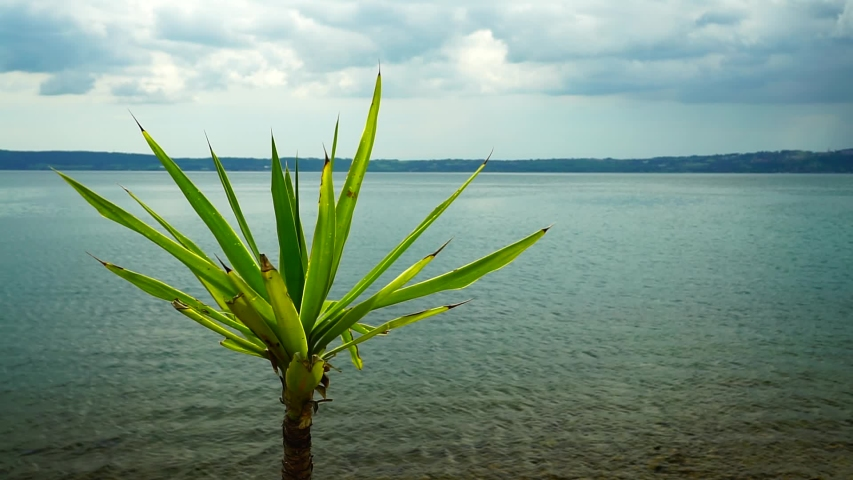 View of a lake from the shore with Yucca Aloifolia plant, on a cloudy day. copy space | Shutterstock HD Video #1053507884