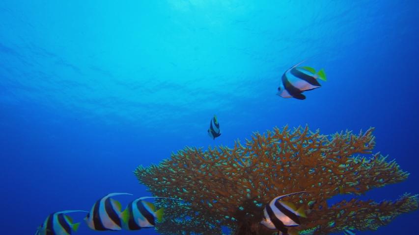 Coral Garden Fish Seascape. Tropical underwater sea fish. Underwater fish reef marine. Soft and hard corals. Underwater fish garden reef. Reef coral scene. Coral garden seascape.  | Shutterstock HD Video #1053568718