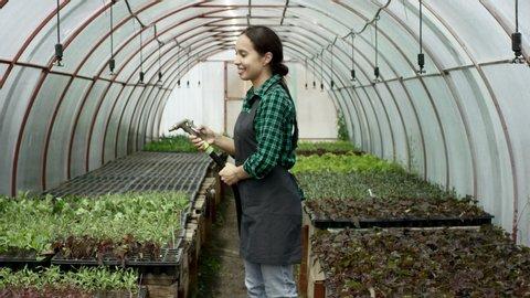 Young attractive female gardener in uniform watering plants with garden hose in greenhouse.