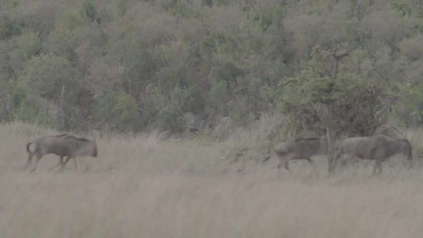 African wildlife footage in natural enviroment | Shutterstock HD Video #1053599201